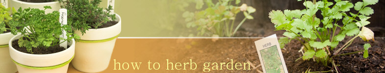 how to herb garden photo
